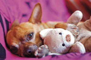 Dog, cat, pet accommodation