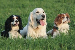 Dogs, all breeds, holiday boarding