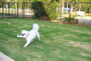 Outdoor exercise area for pets